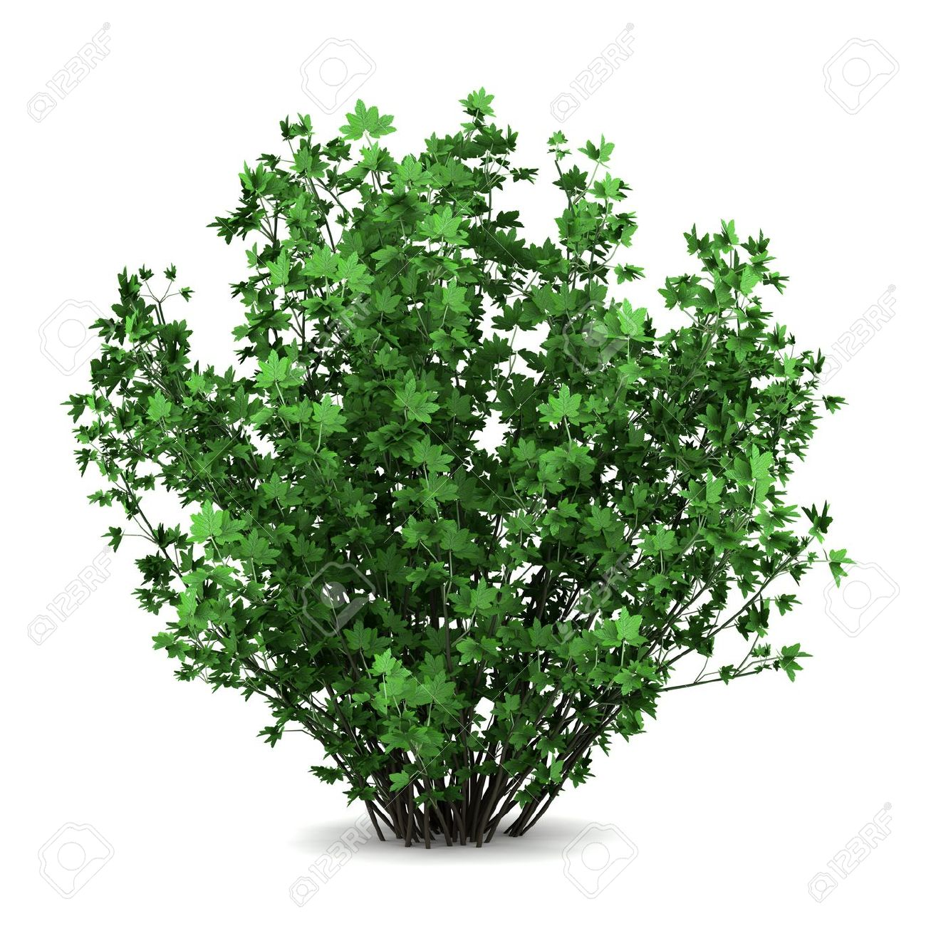 Drawn shrub tree background Plants previews 123rf images com