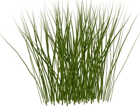 Shrub clipart grass On 50 Search Tall tall