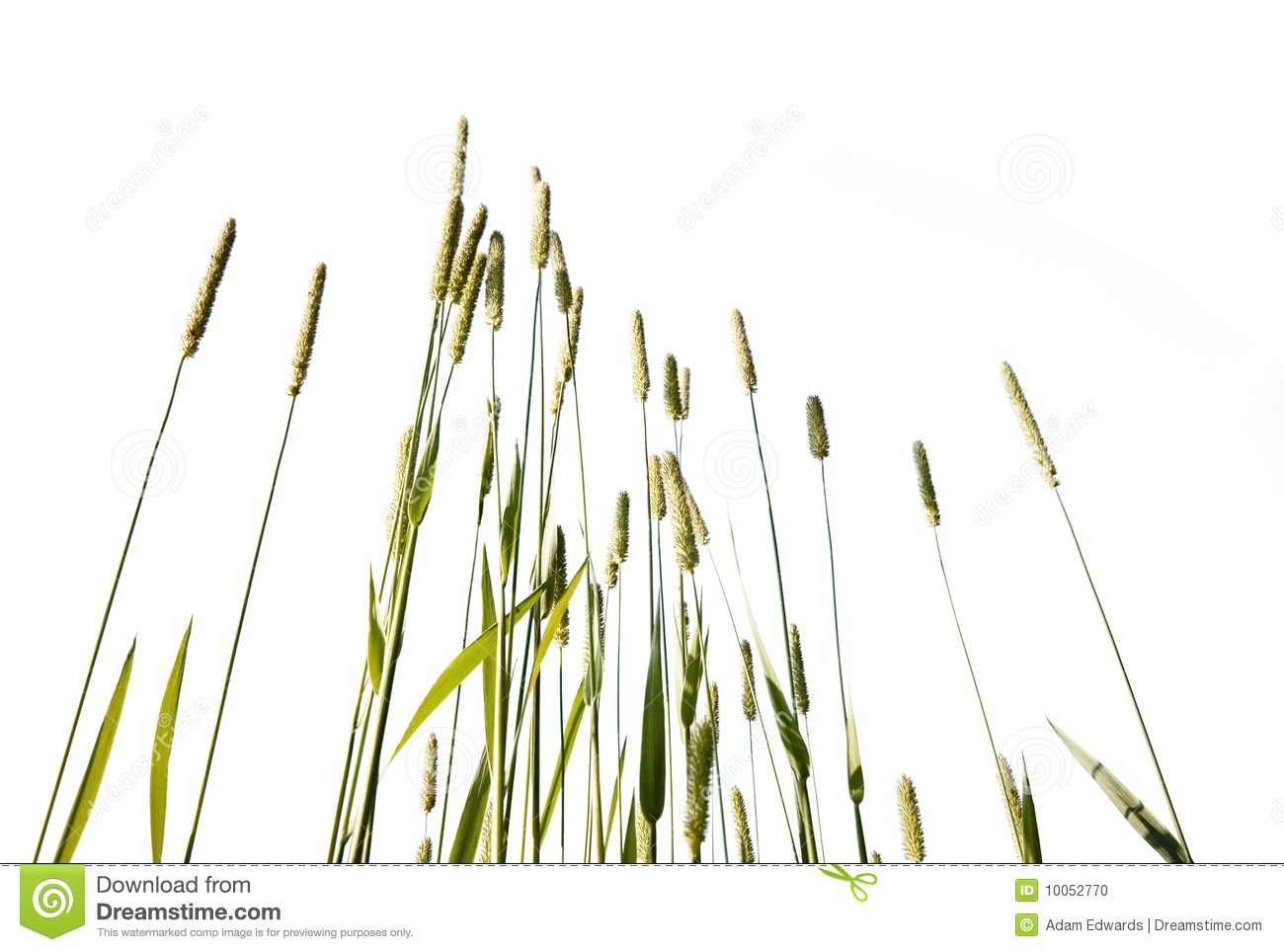 Clipart clipart Search Grass grass