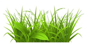 Weed clipart transparent Cliparts Grass Cliparts Weed Cliparts