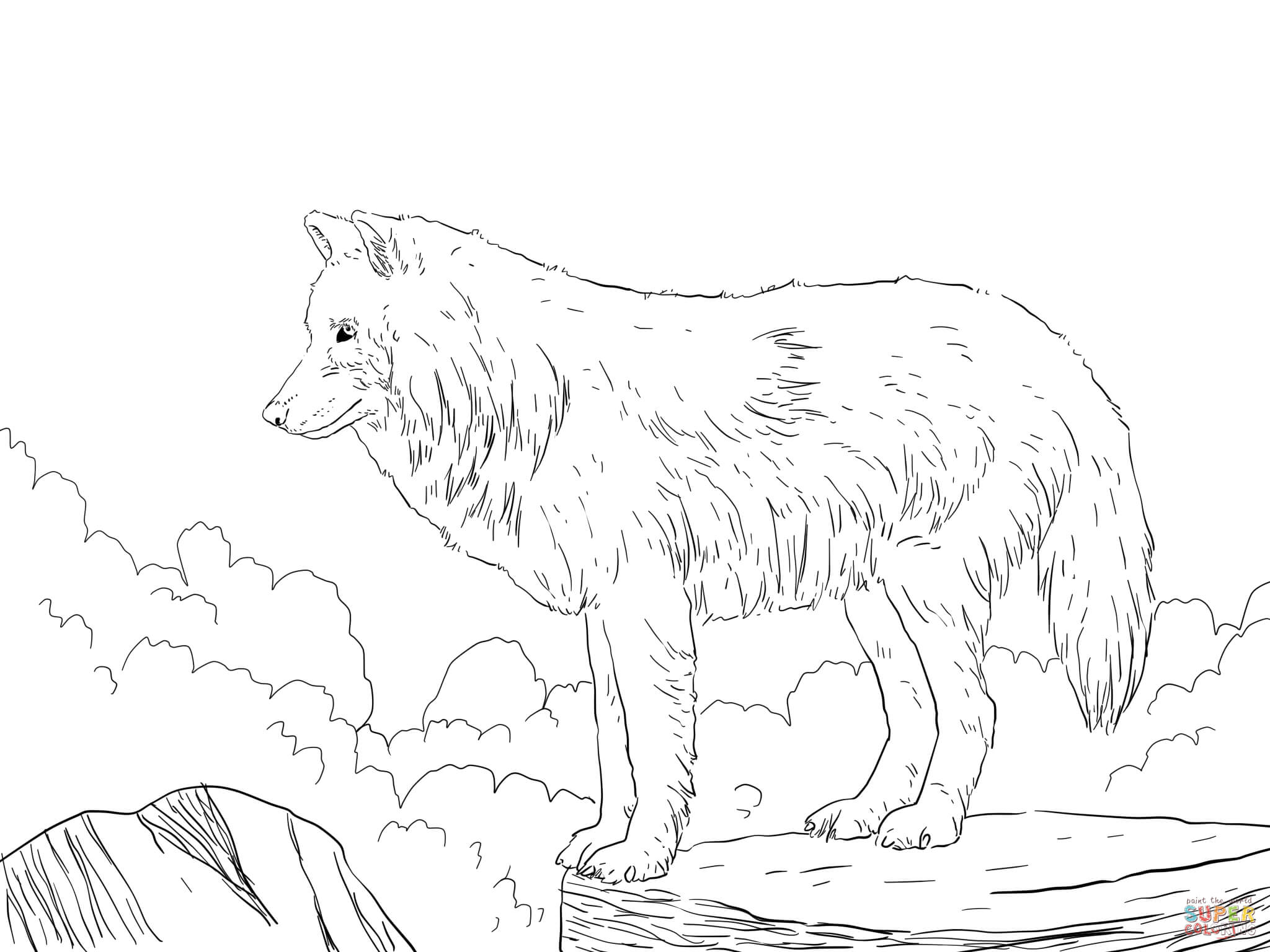 Arctic Wolf clipart coloring book Coloring Wolf Pages Snow pages