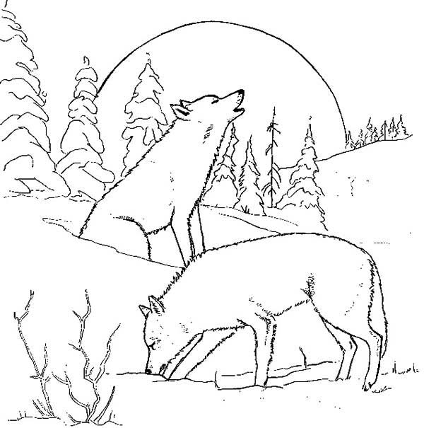 Arctic Wolf clipart coloring book Coloring Coloring Pages Wolf 2480
