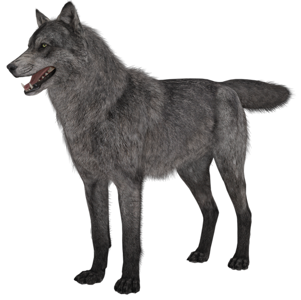 3D clipart wolf Animal PNG Picture Wolf Transparent
