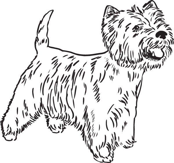 West Highland White Terrier clipart Terrier terrier west (57+) highland