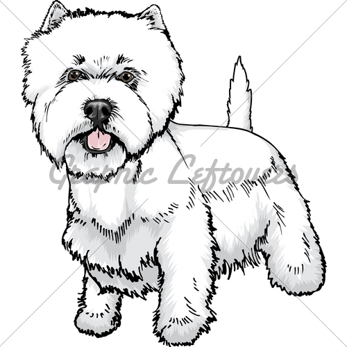 West Highland White Terrier clipart Images Highland Standard License Stock