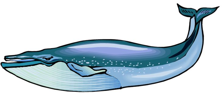 Whale clipart Sewing Cliparting free art images