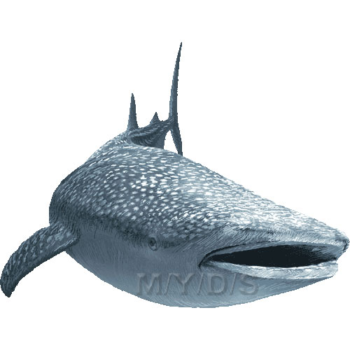 Whale Shark clipart Whale clipart / Shark picture