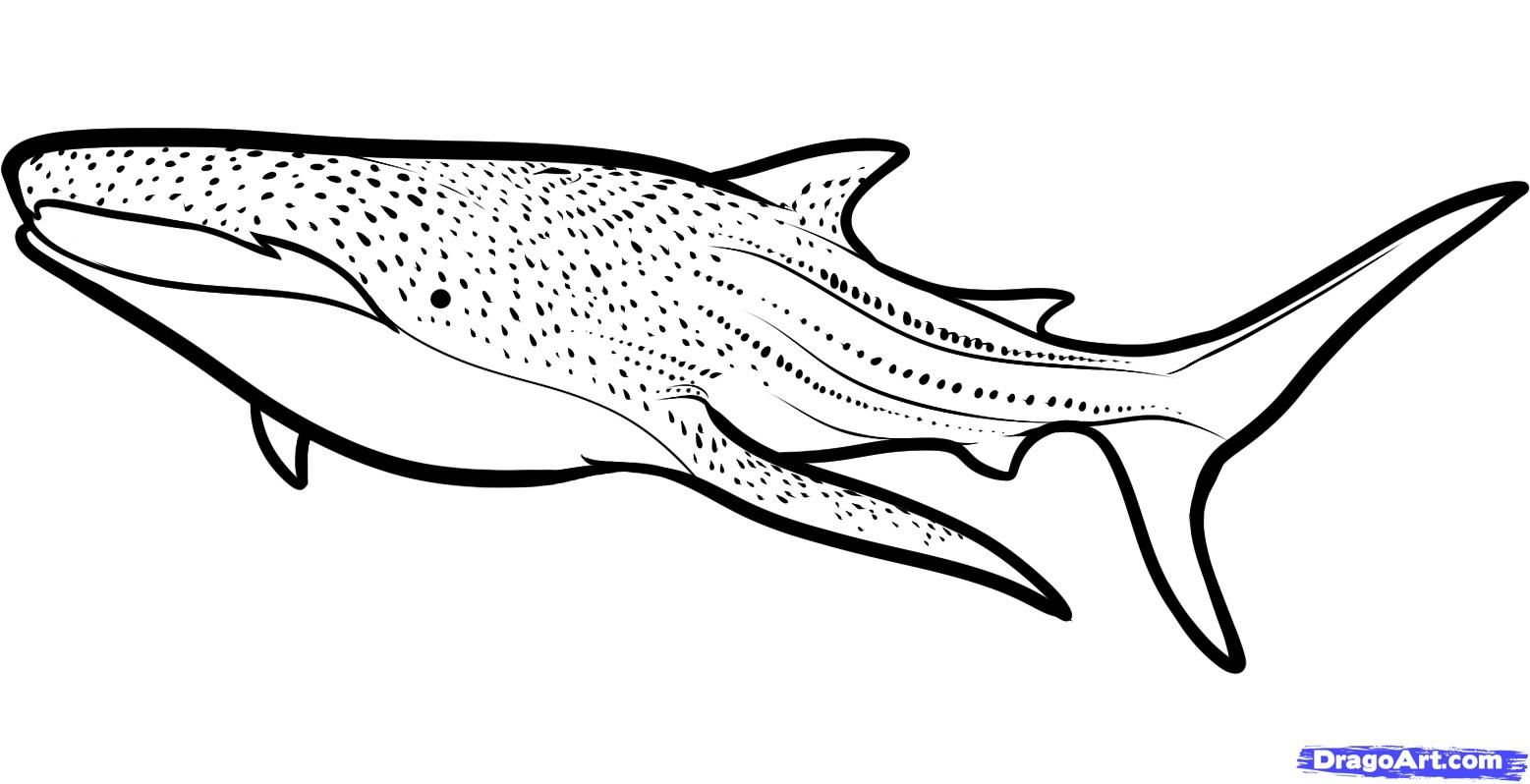 Whale Shark clipart Whale  draw whale shark