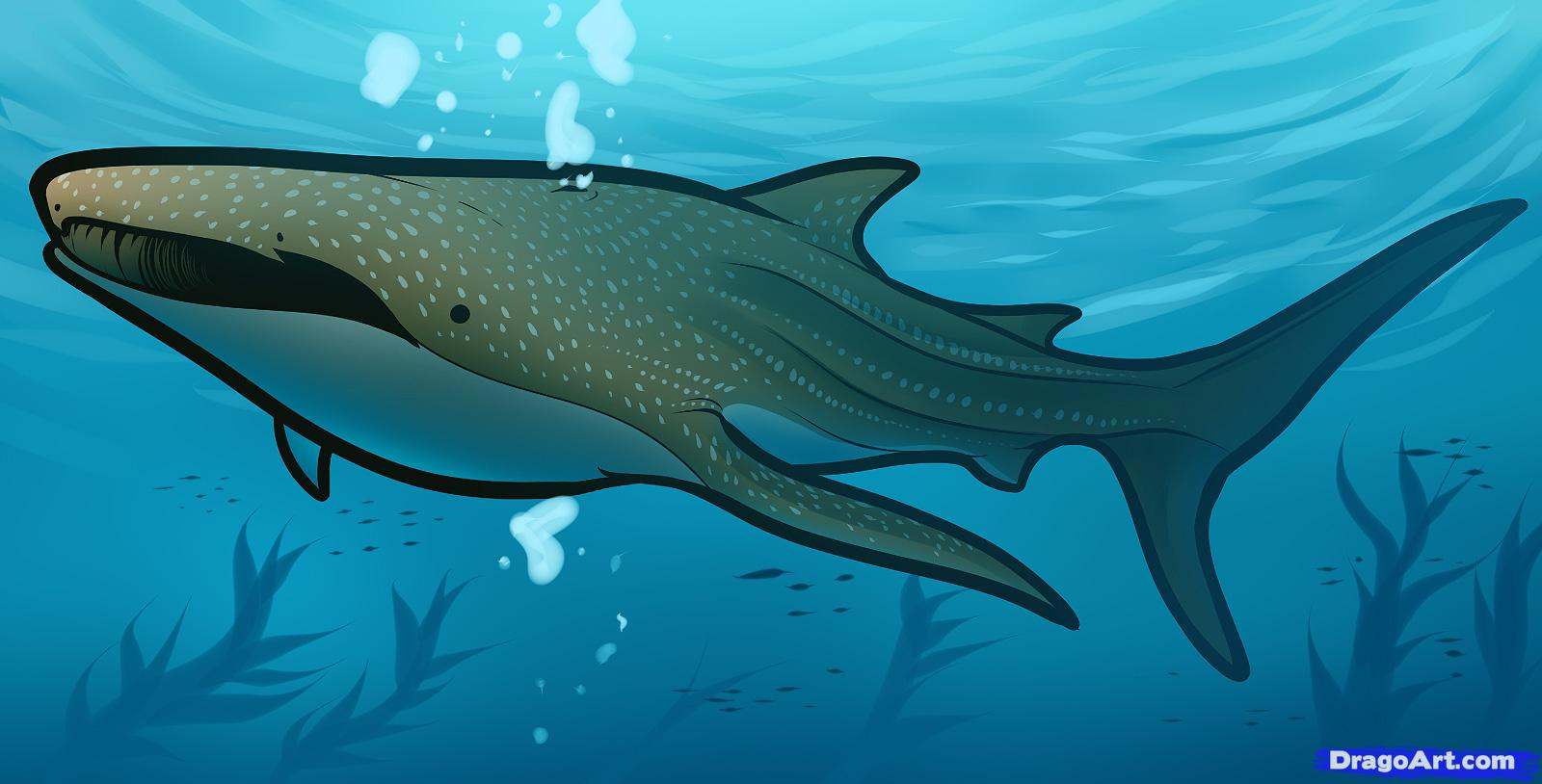 Drawn shark whale shark A animals draw to Draw