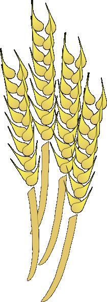 Wheat clipart Wheat clipart ai Clip 88KB