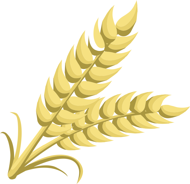 Wheat clipart Wheat Wheat drawings clipart #19