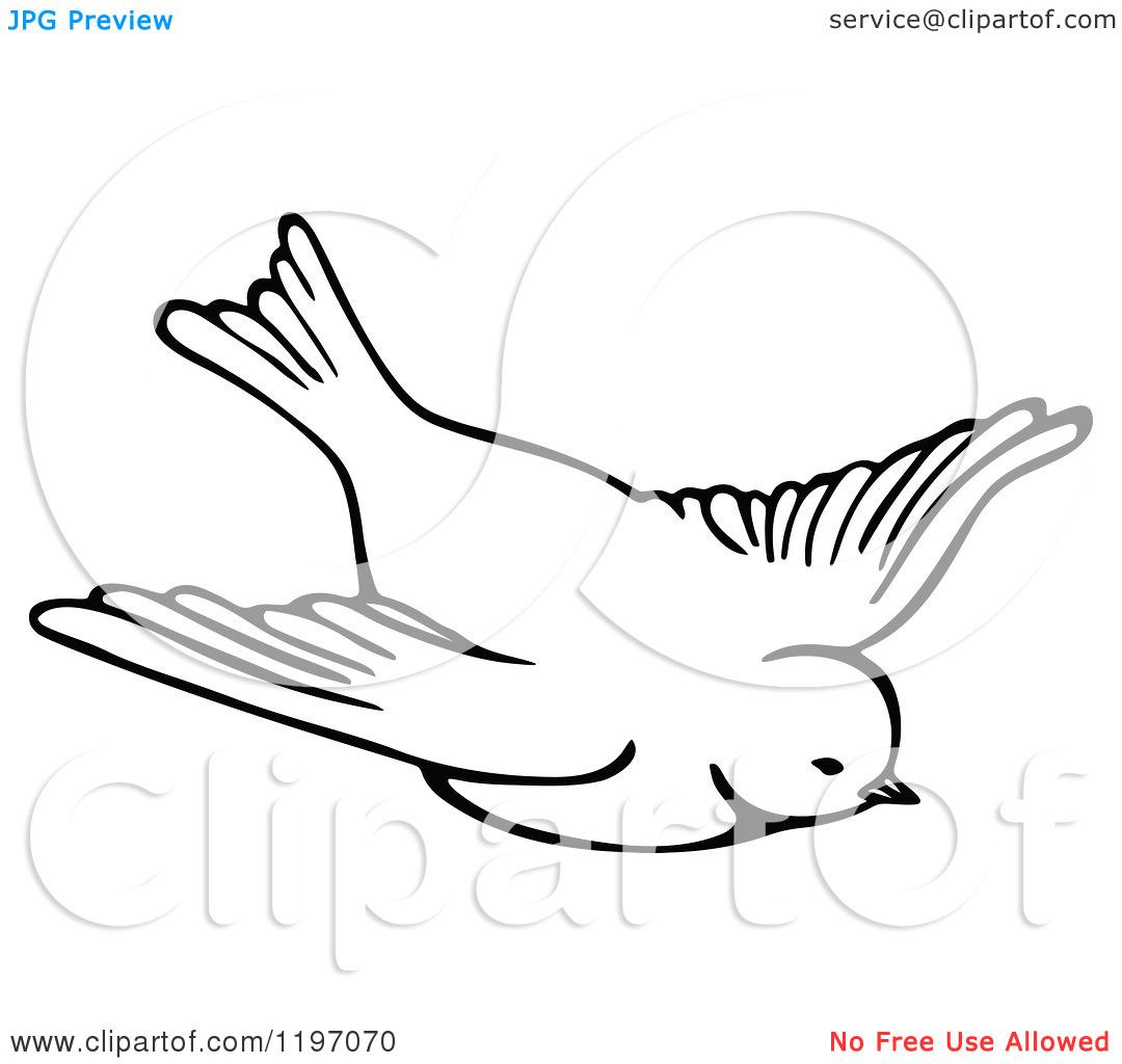 White clipart birdblack Clipart Bird Clipart Images White