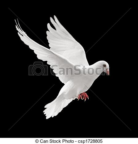 White clipart pigeon flying Stock on  pigeon white