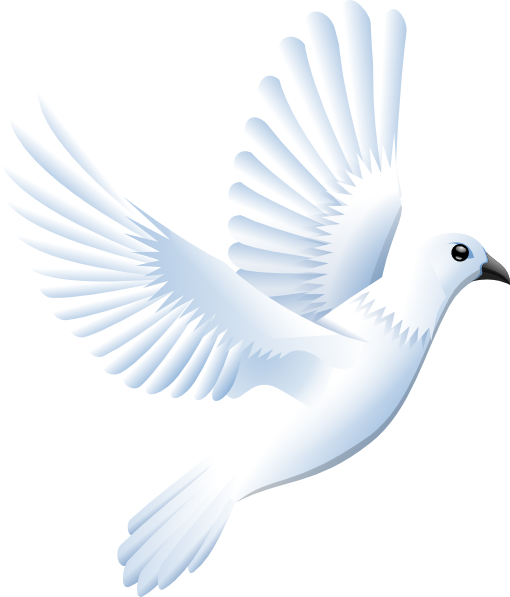 White Dove clipart White Clker Art this clip