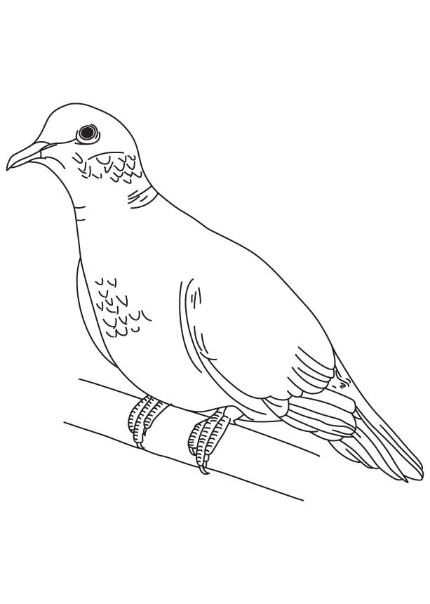 Mourning Dove clipart line drawing Home Coloring Art White Page