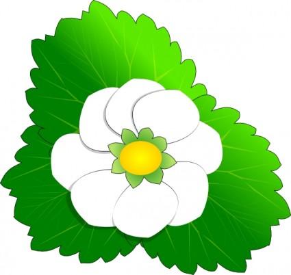 White Flower clipart Flower Clip Art White Clip