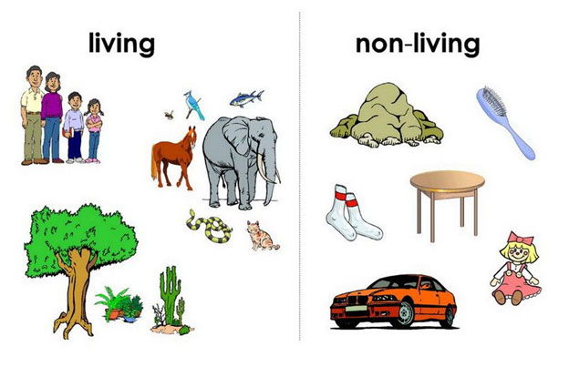 Photography clipart non living Living living worksheets lessons