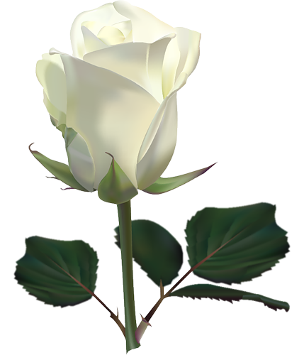 White Rose clipart living thing Rose Clipart Art Rose Clip