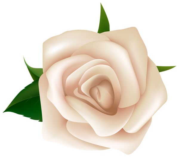 White Rose clipart living thing 10 clipart Beautiful images Rose