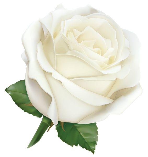 White Rose clipart Art Image 3 White Clip