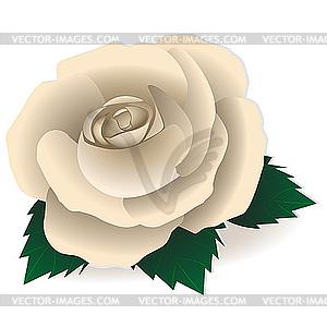 White Rose clipart 101 Clipart rose white clip