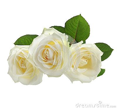 White Rose clipart Rose rose white #4 White