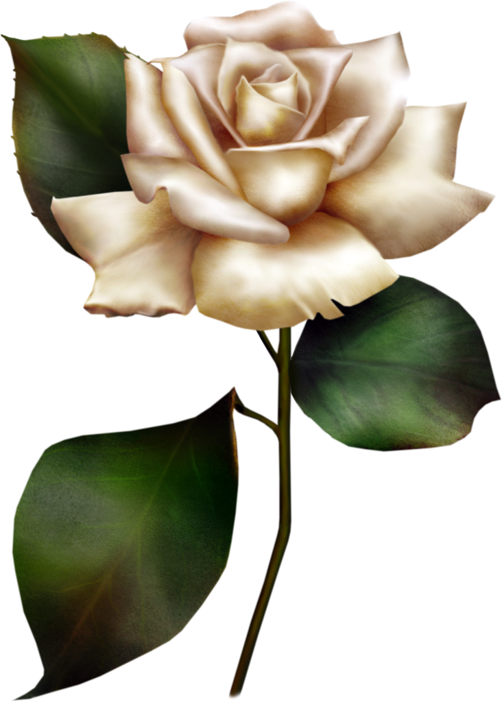 White Rose clipart living thing Rose White Clipart Clipart Rose