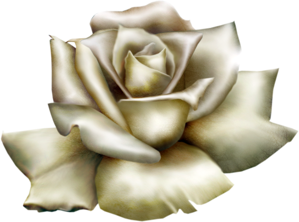 White Rose clipart  full View Gallery High