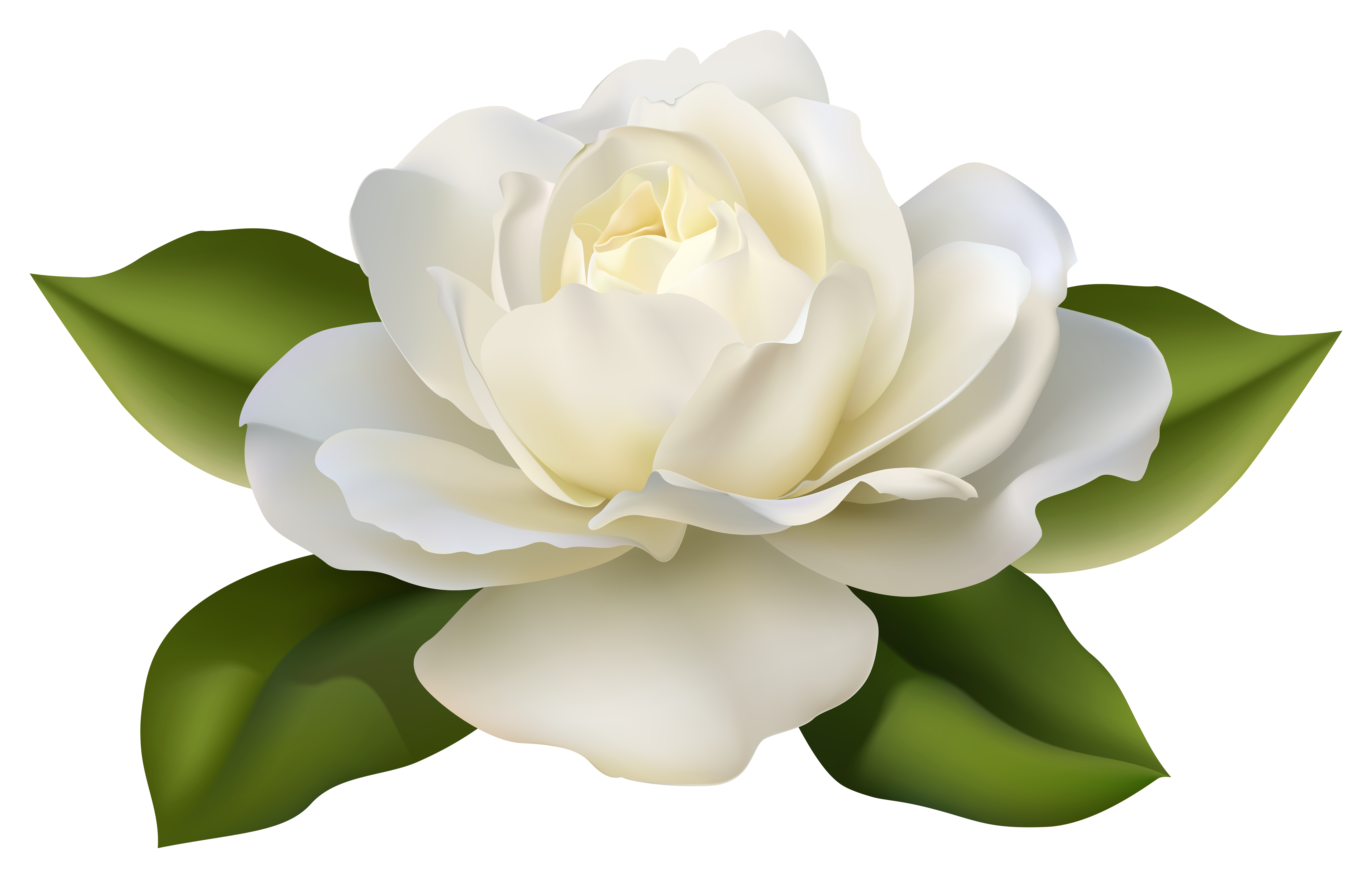 Beautiful clipart rose plant Leaves Image White  with