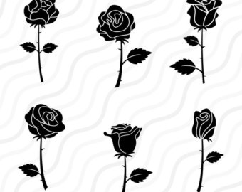 White Rose clipart beauty Rose table roses Cut Clipart