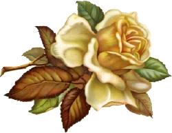 White Rose clipart brown flower #1