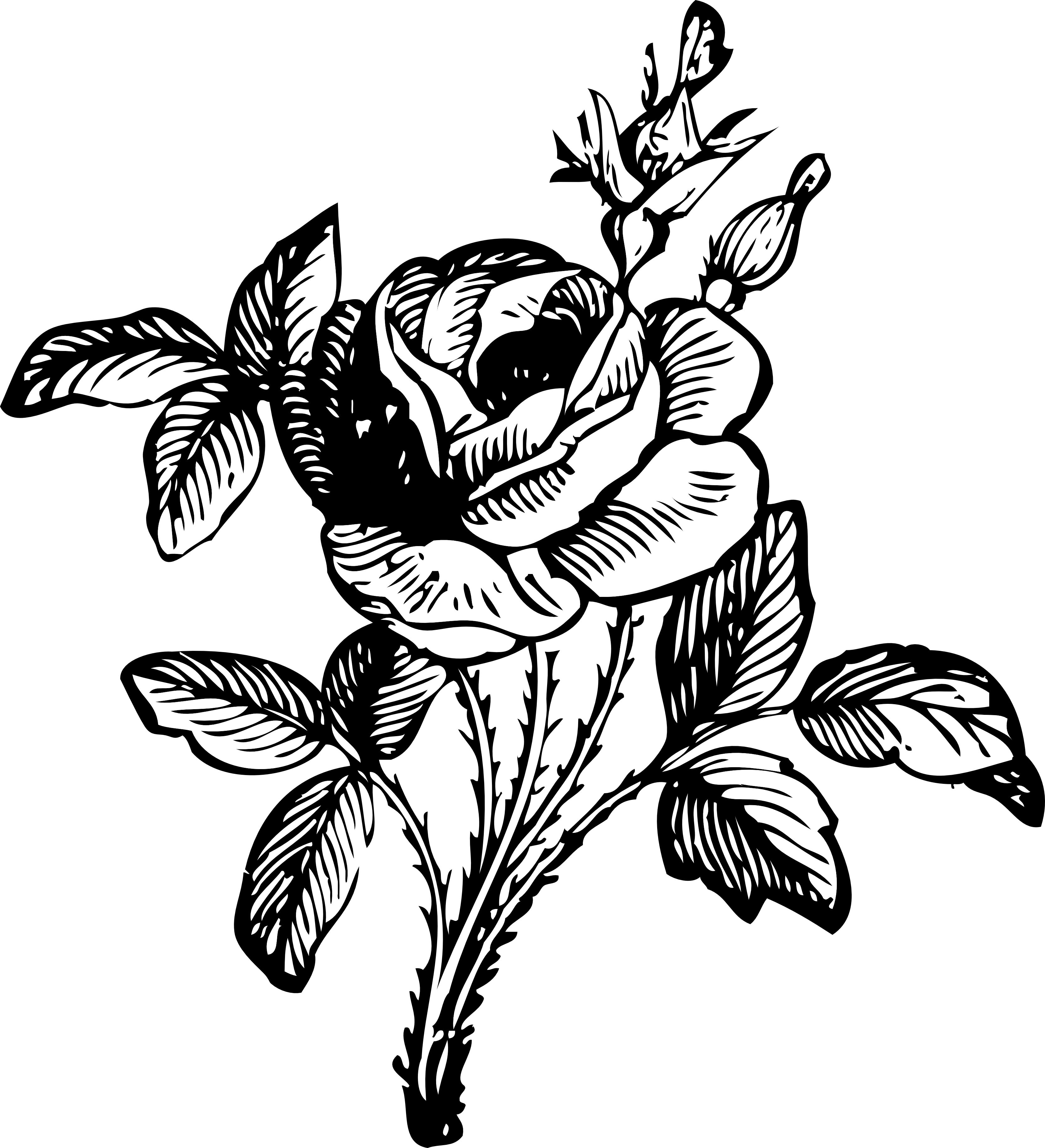 Drawn rose line art Library And Download Free