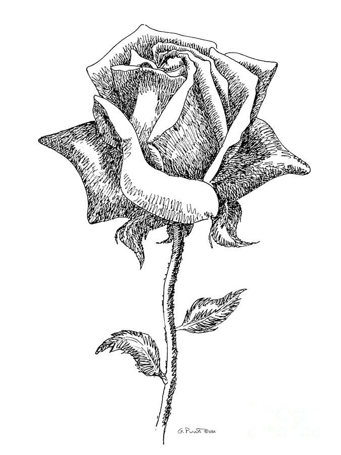 Drawn rose black and white Art Black Rose 5 Clip