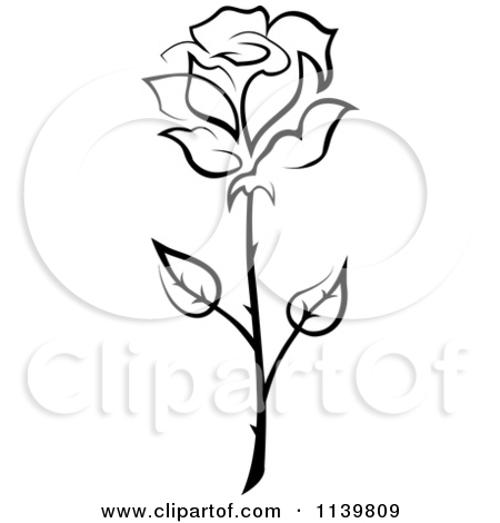 White Rose clipart flower drawing #4