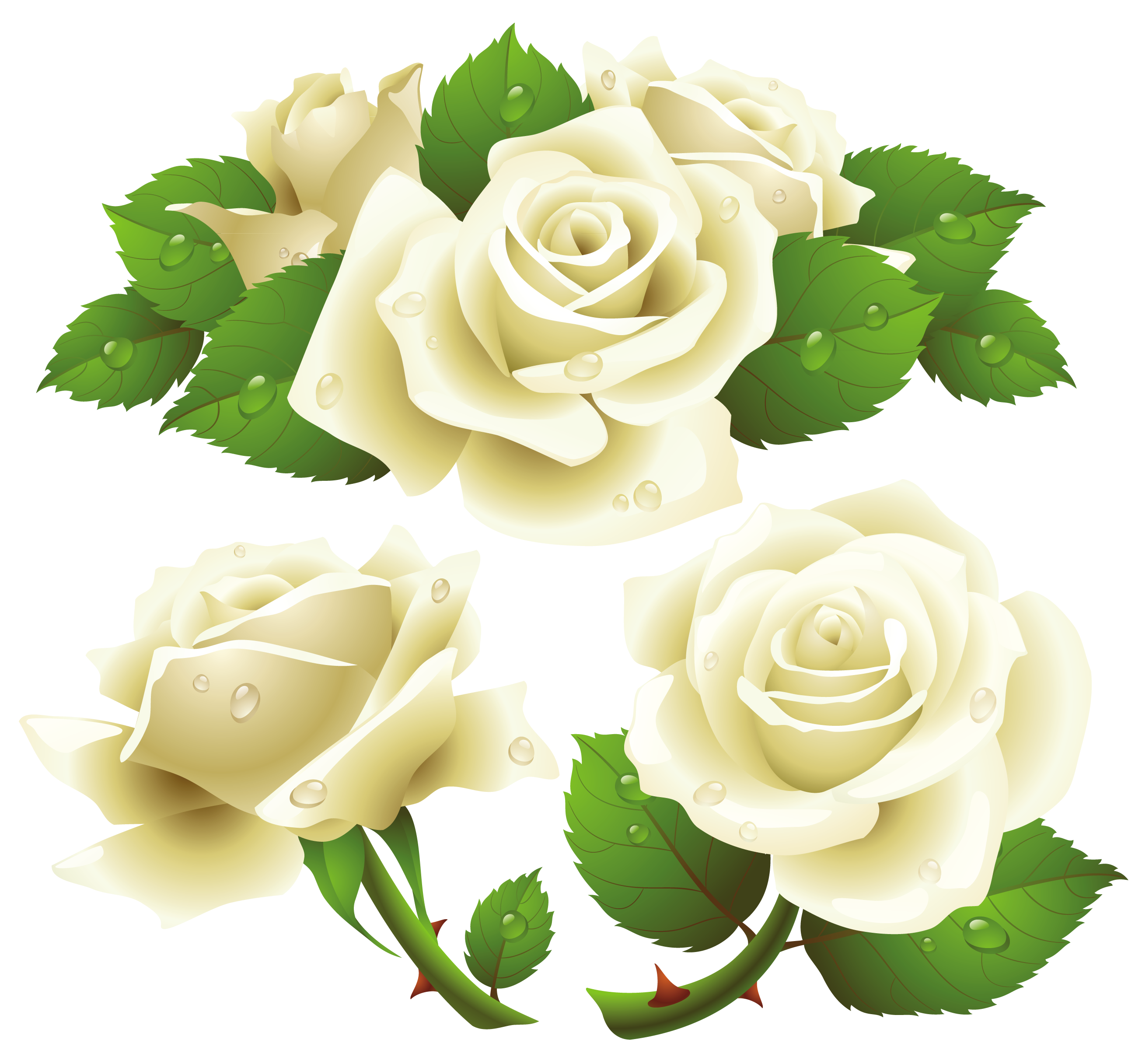 White Rose clipart graphic Clipart Rose and  white