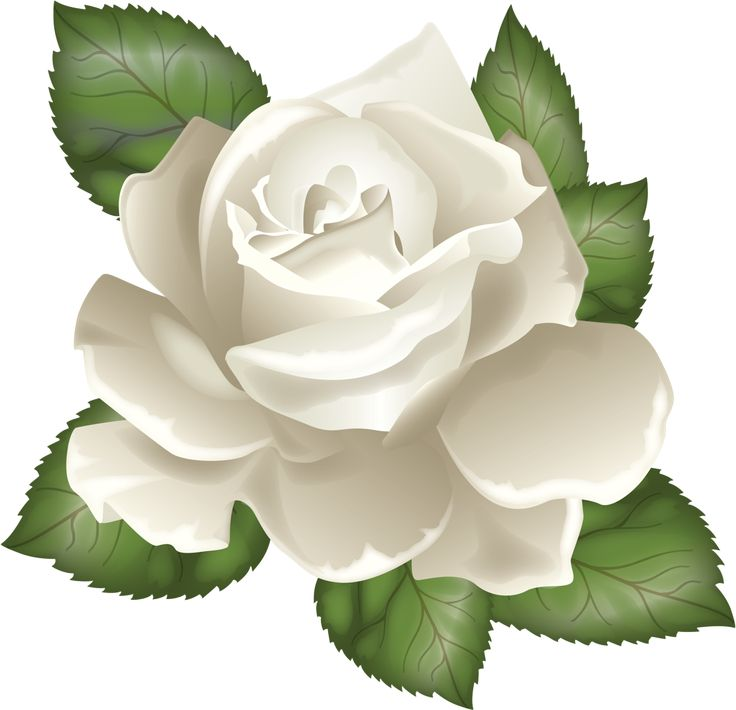 White Rose clipart green #13
