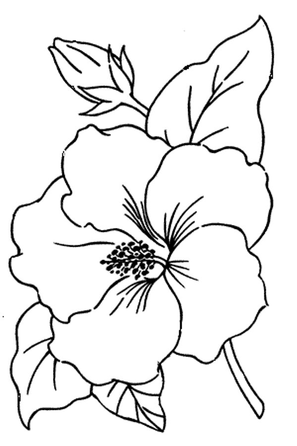 Buttercup clipart bunga raya Ideas Hibiscus and embroidery Hibiscus