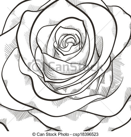 White Rose clipart illustration #5