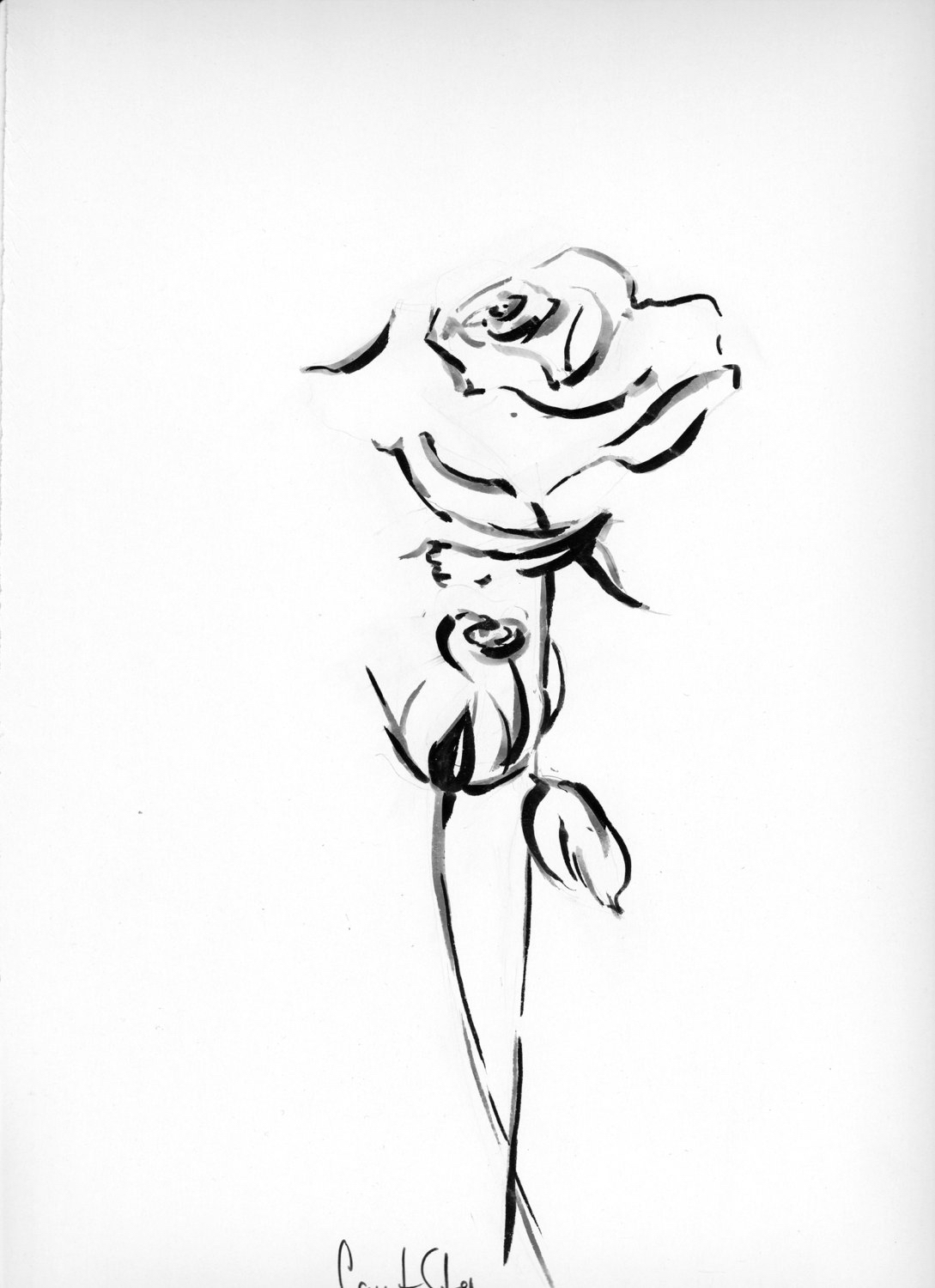 White Rose clipart pen and ink #6