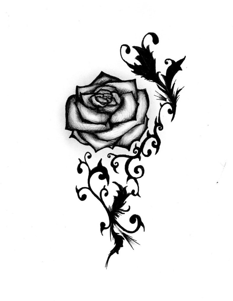 White Rose clipart pen and ink #14