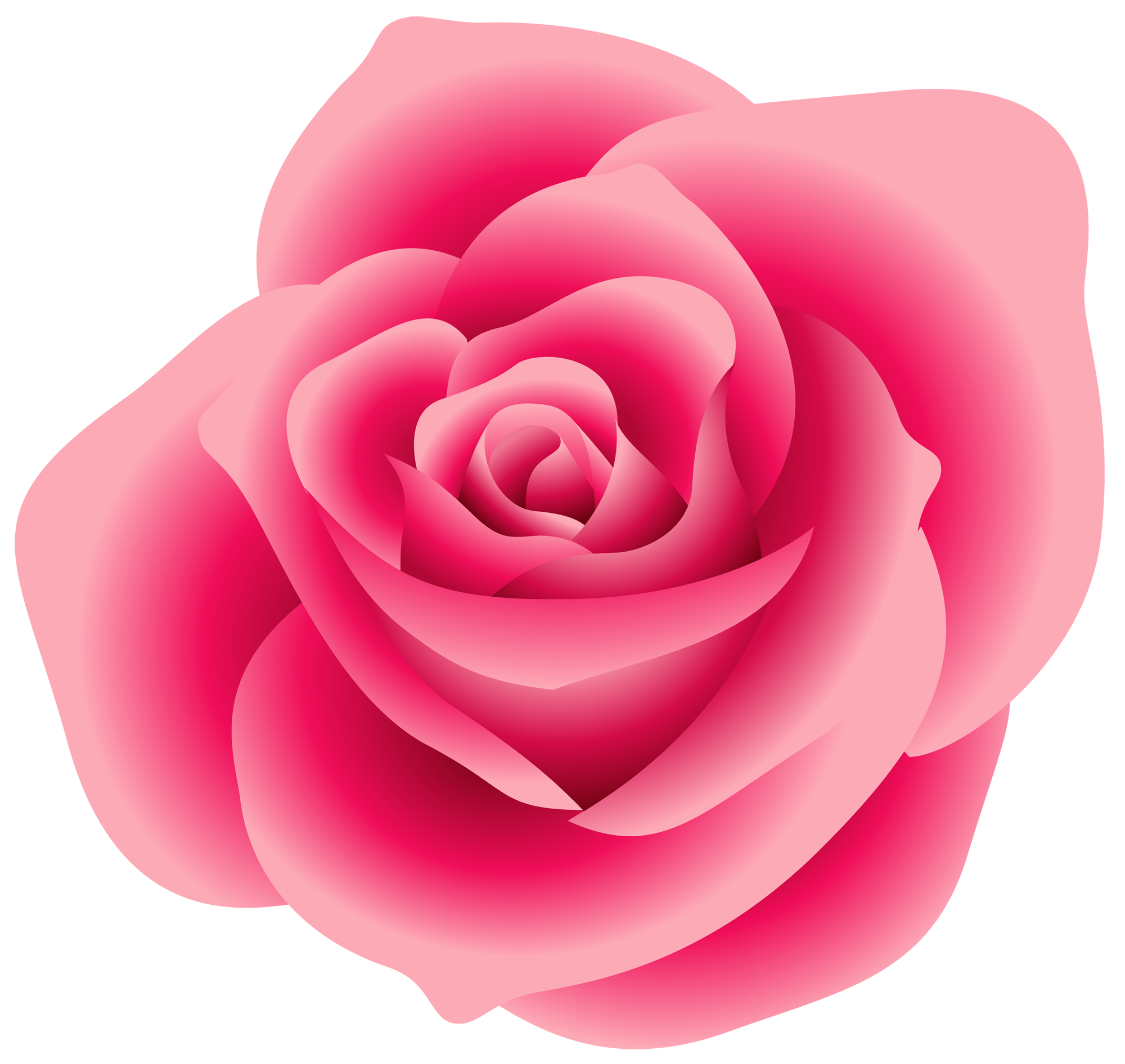 White Rose clipart real Pink roses Pinterest Rose Pink