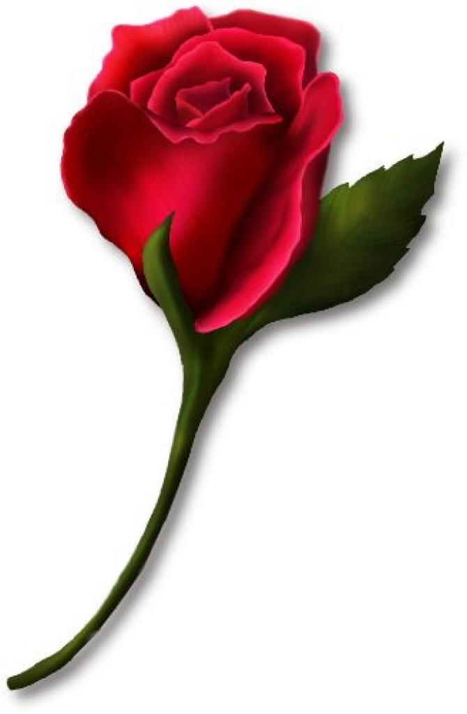 Red Rose clipart rose flower #1