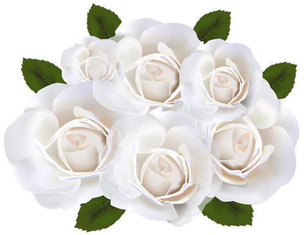White Rose clipart rose garden Pinterest art White Clip on