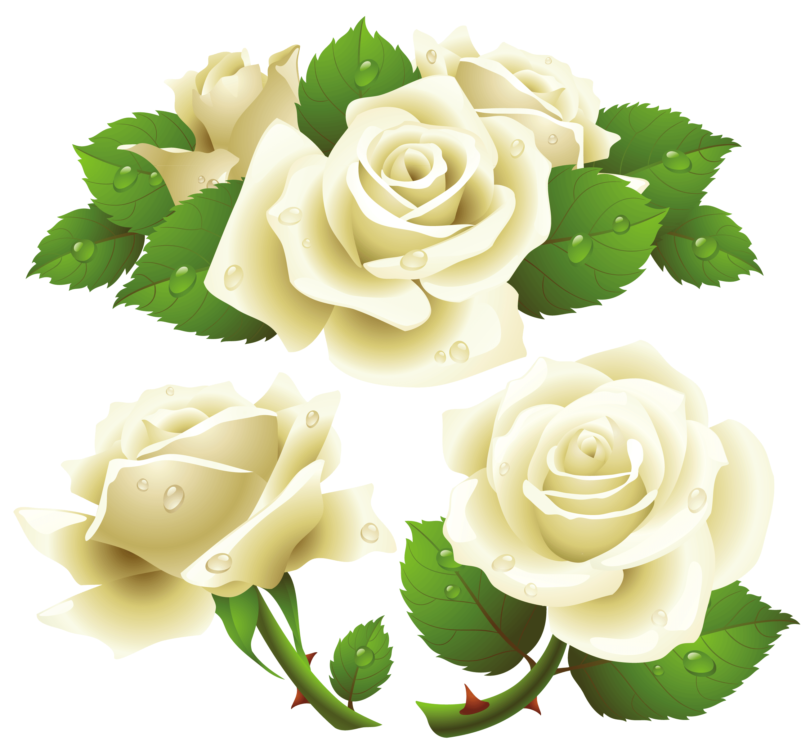 White Rose clipart rose garden  Picture Image White Download