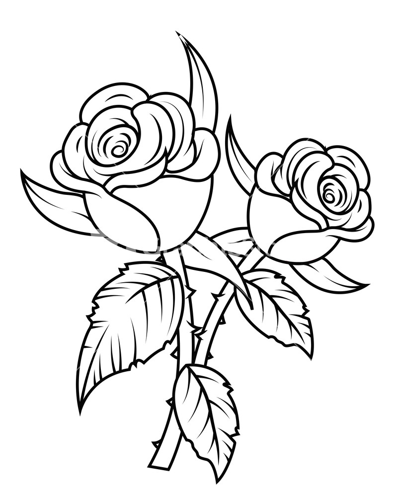 White rose art and flowers