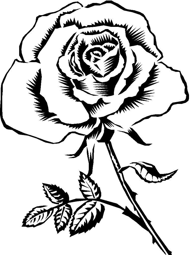 Drawn rose black and white Clipart and and black and