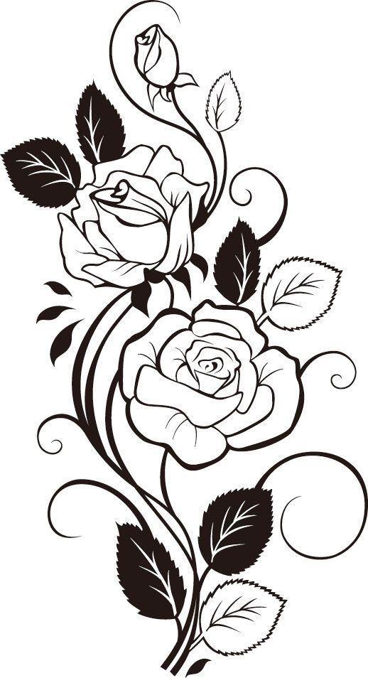 White Rose clipart rose vine #5