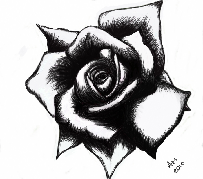 White Rose clipart simple #14