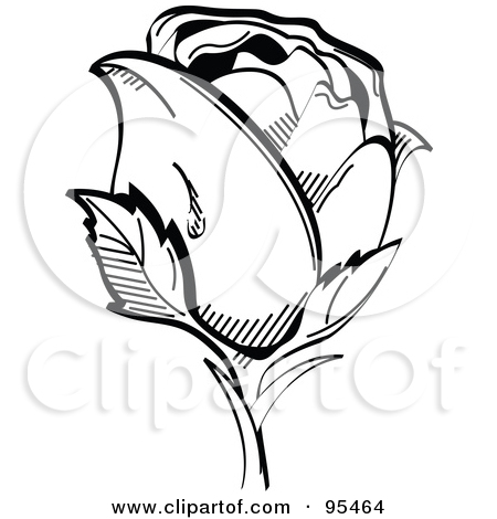 White Rose clipart simple #13