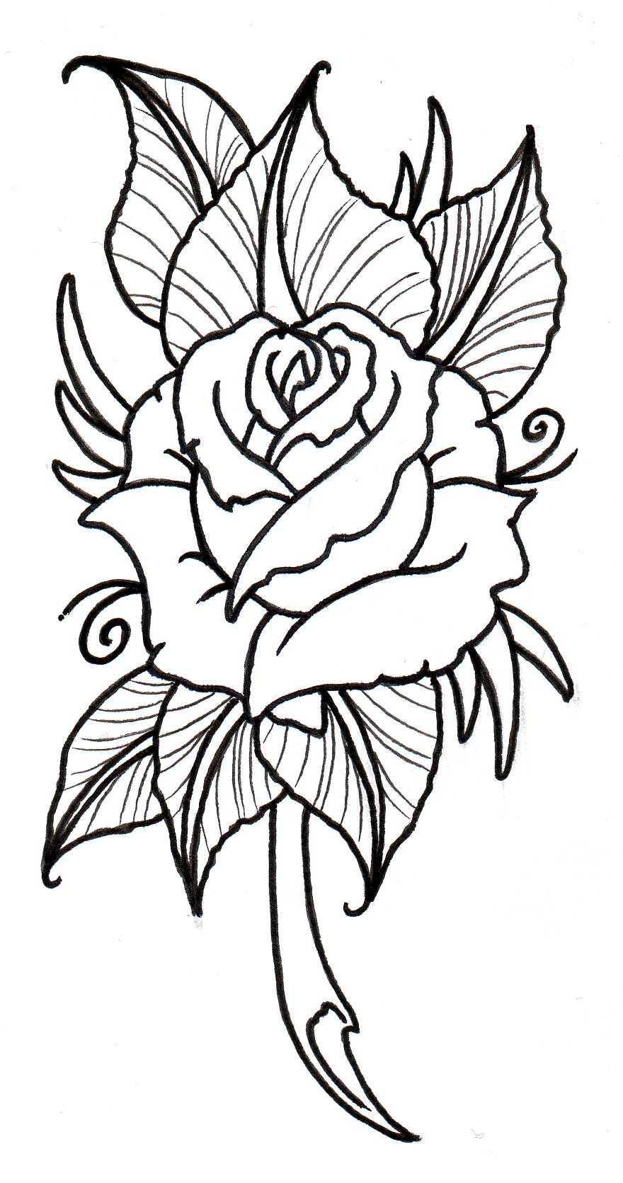White Rose clipart sketch #15